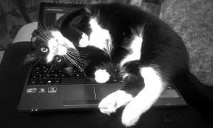 Schreiben mit Katze